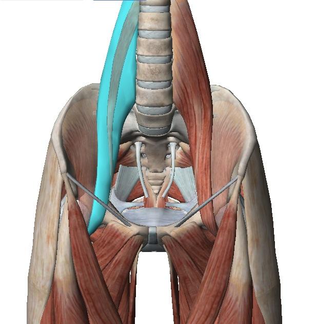 Valu naiste alumise selja ja liigestega Harja pohjustab haiget