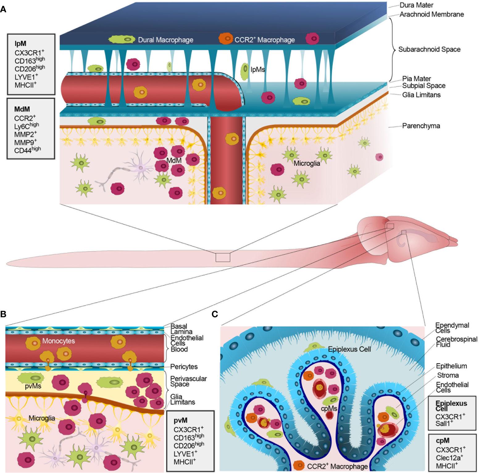 Doppel Herz Chondroitiin ja glukoosamiin Osta Snapshot polve kapuuts