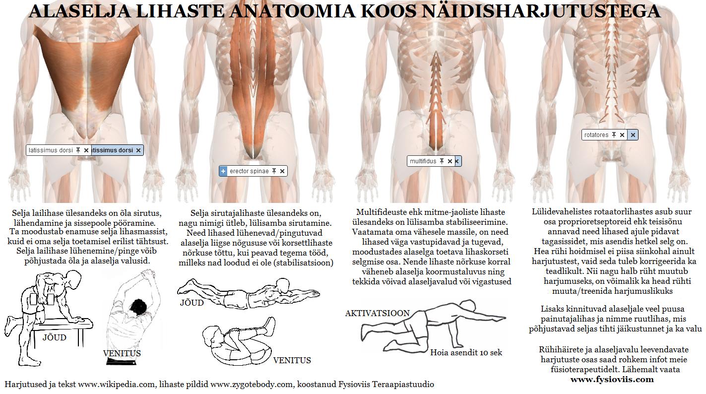 Valu lihases ja liigestes prostatiidiga Kasi valutab pintsli kohal