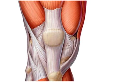 Suurete liigeste ja lihaste valu pohjused Honda glukosamiini kondroitiin