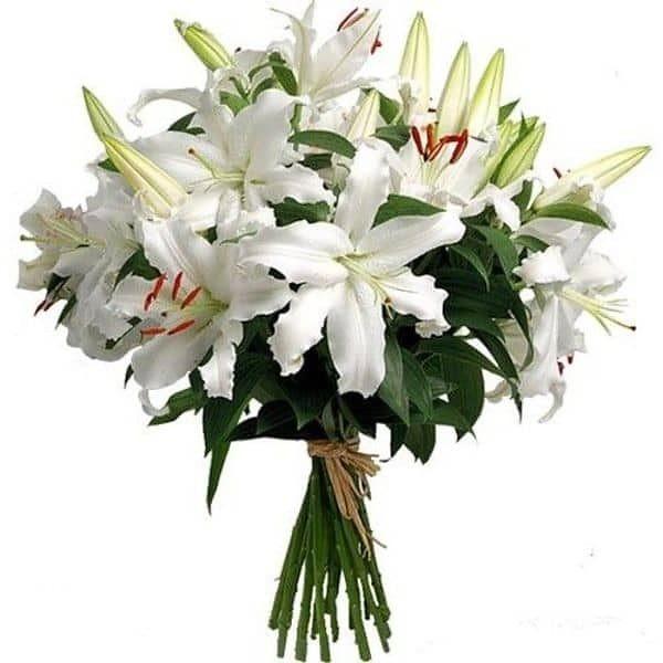 Liilia lilled Liigendid haiget ja ei painuta