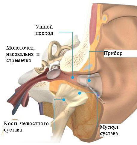 Kui ureaplasmoosi kahjustab liigeseid