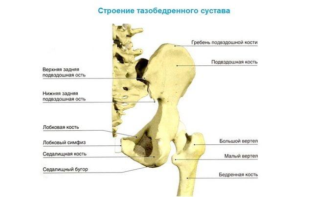 Kuunarnuki lihaste looklaine Kuidas ravida ola liigese artriidi