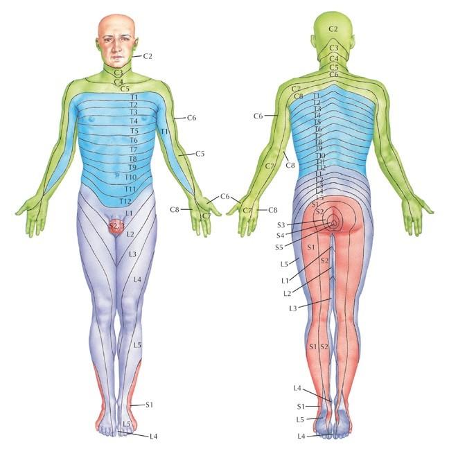 Vitamiinide artroosi ravi