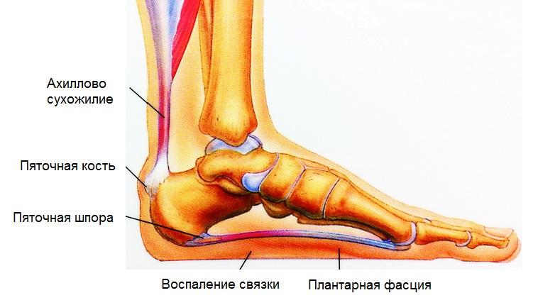 Bivalose artroosi raviks