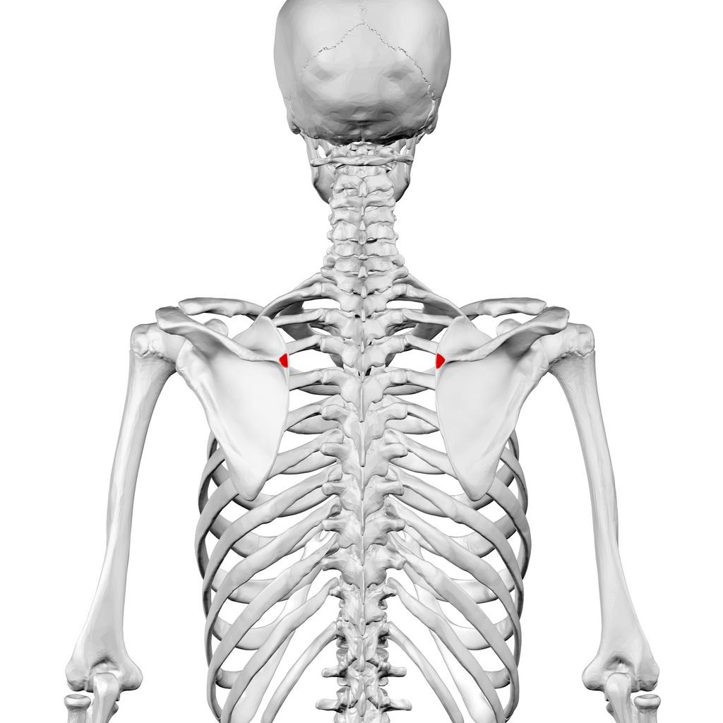 Valu rindkere ja liigesed