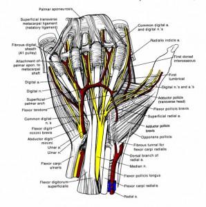Kreem liigestele ja ligameeridele valuvaigistav seljavalu ja liigestega