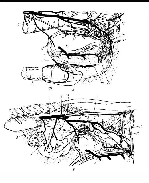 Kuidas eemaldada valu sorme liigeses valus liigesed ja pea