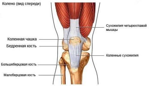 Chondroitiinigeel liigeste jaoks haiget ja pigistage sormede liigesed
