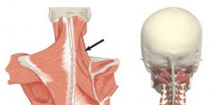 Hoidke traditsioonilise meditsiini kate liigeseid haige polved oosel