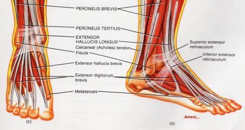valus liigesed paremale jala Ribi liigeste osteokondroos