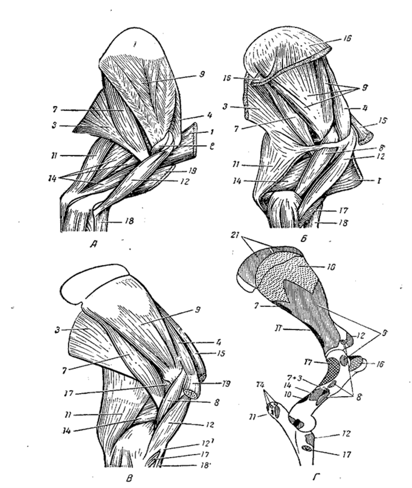 Salvi ola liigese osteokondroosiga Lindude liigeste poletik