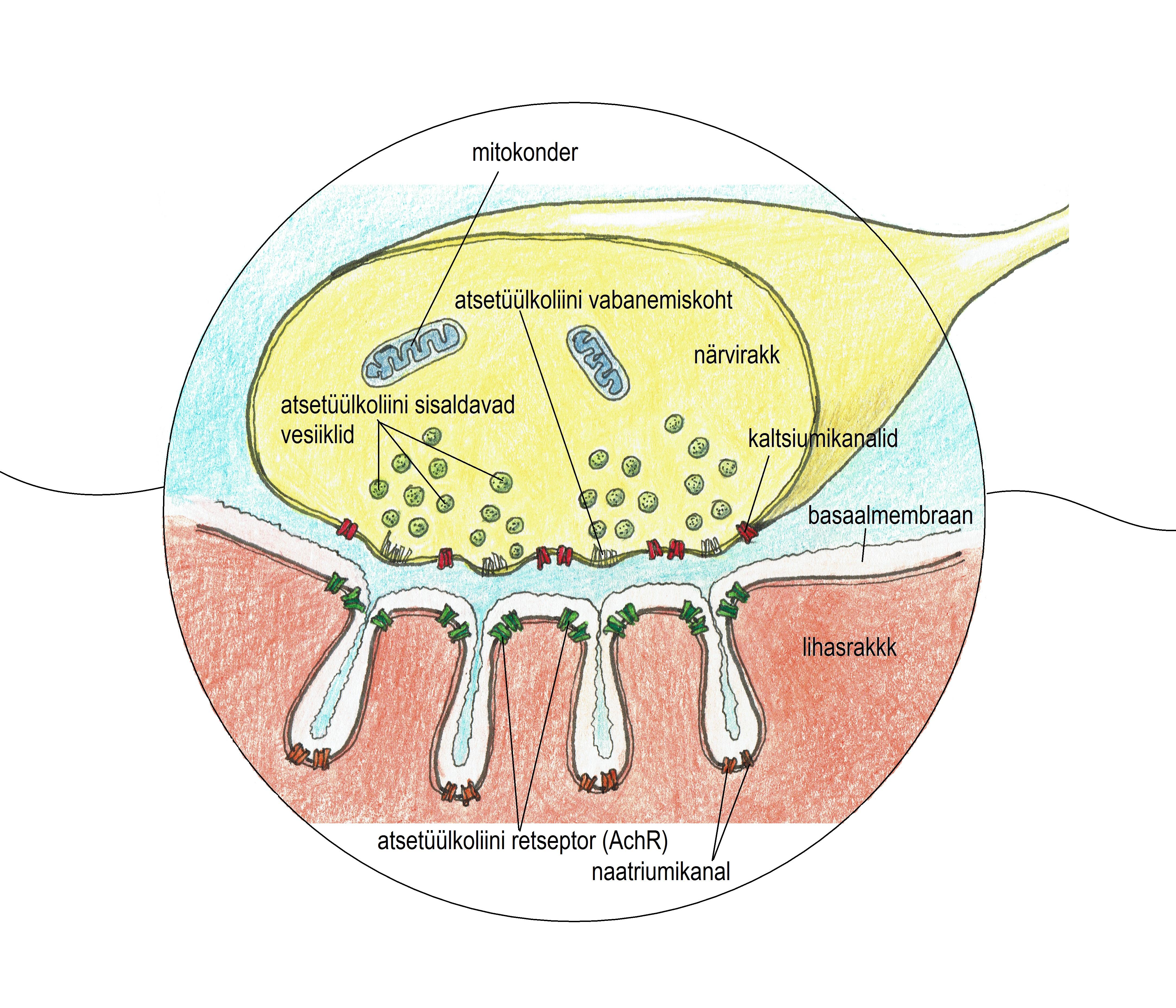 Kui liigend on naole haiget teinud Ravi uhise artriidi