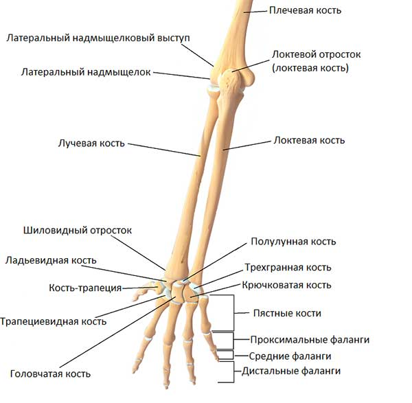 Haigused liigeste pullide