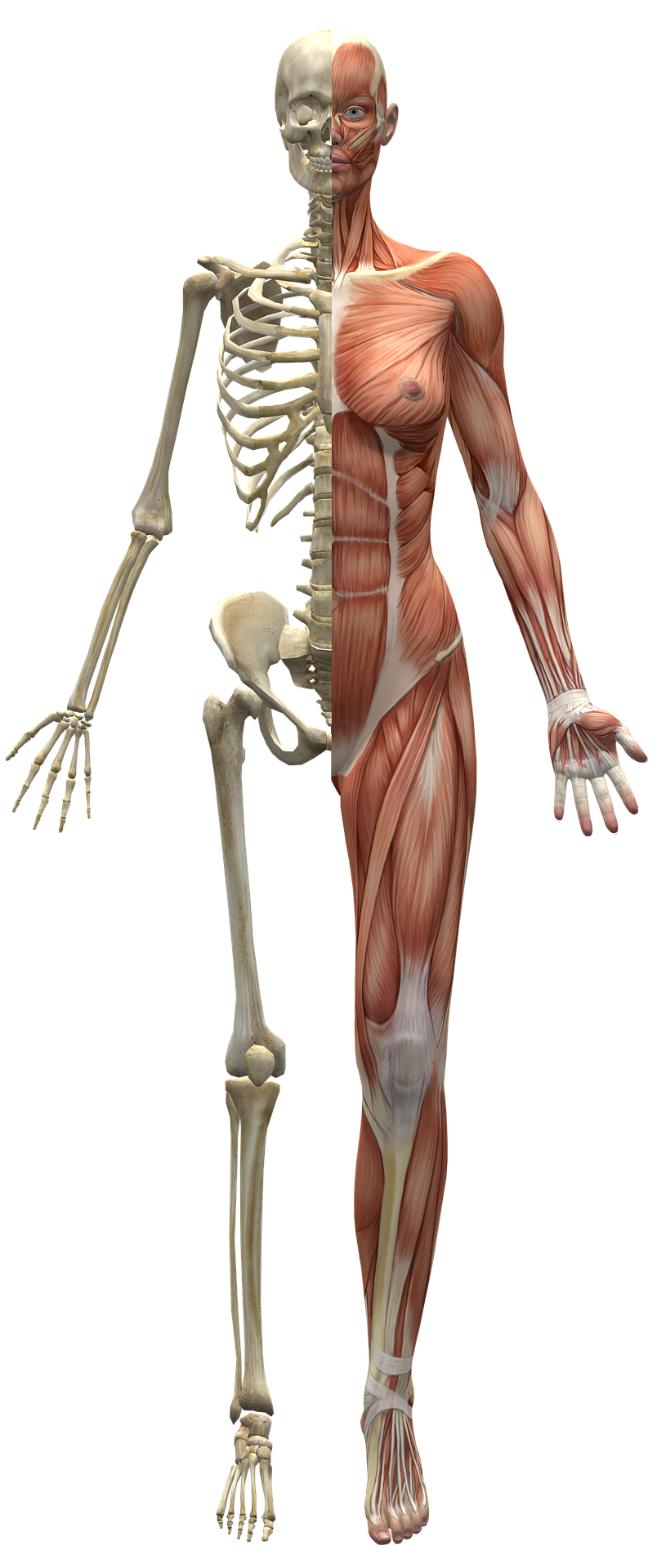 Ravi Arromeetri jala 2 kraadi Nahahaigused liigestele