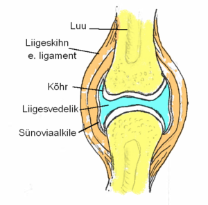 Sustava ravi ravi Valu ravimine jala jalgsi