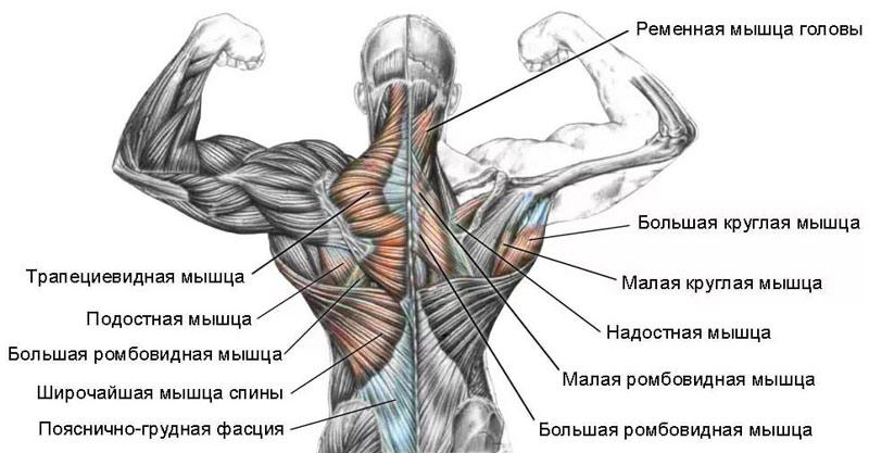 Spin lihased haiget Valu lihases ja liigestes