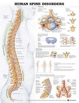 Spine selglus valus