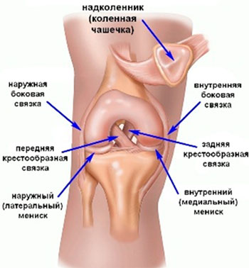 Mida saavad kate sormede liigesed haiget teha Valus sormede harja vahel