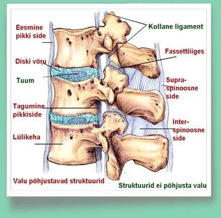Liigeste golovin-ravi Osteomueliidi uhise ravi