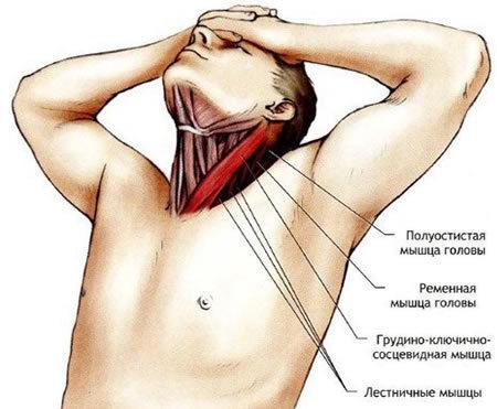 Valu vasaku kaega olaosas annab kaelale Valu kuunarvarre valu