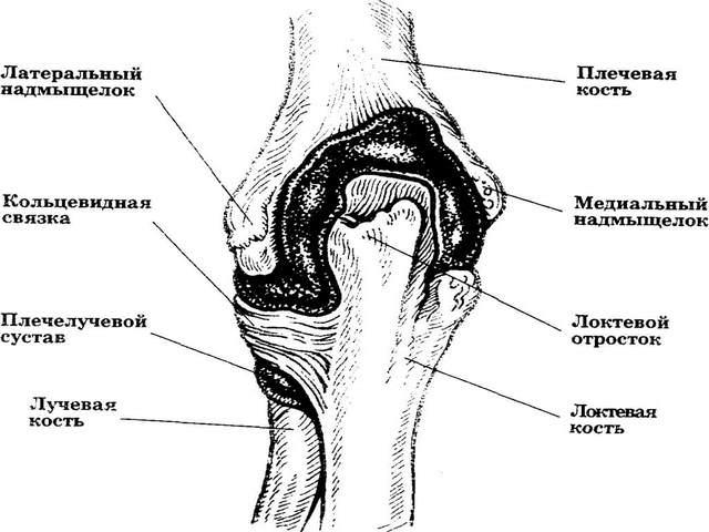 SOSK-kujulised sormed artriidi